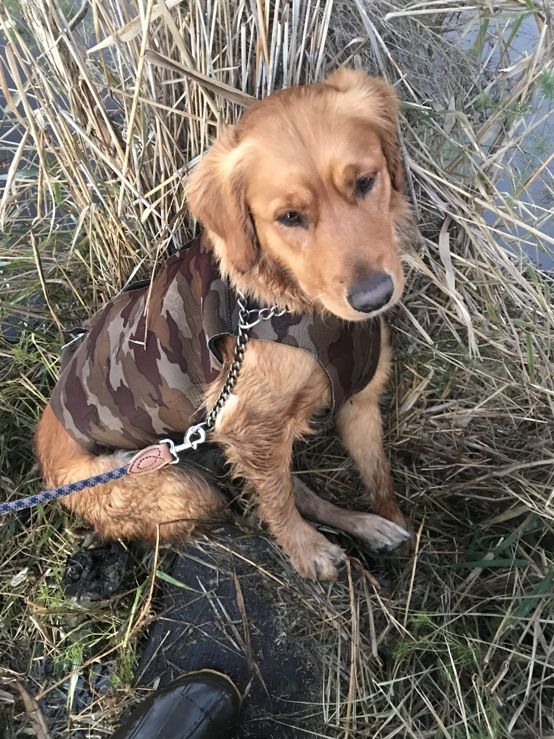 First Duck Shoot - 2 yrs old